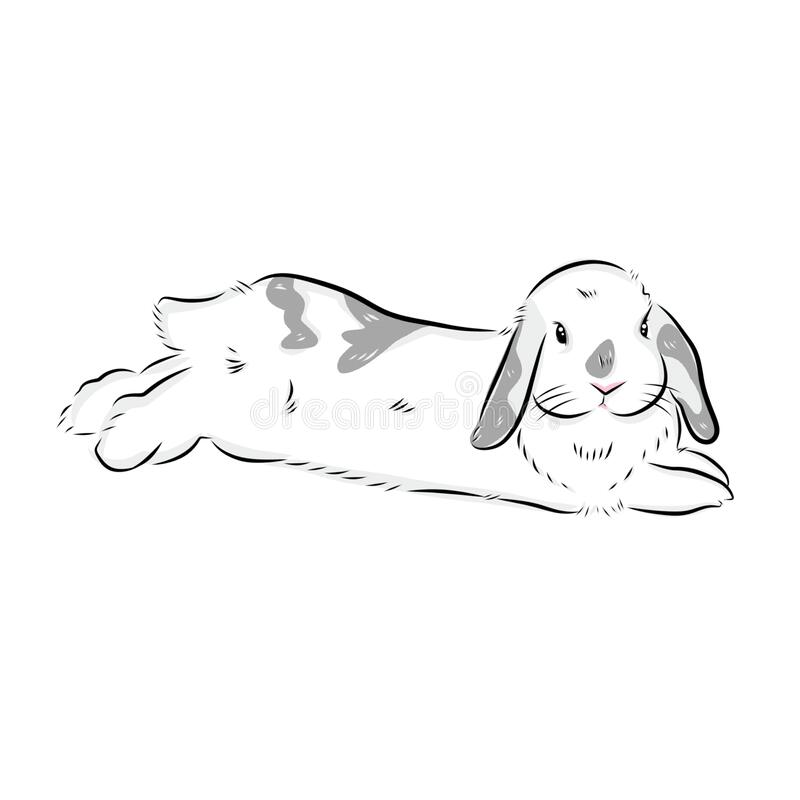 Free Drawing Cute Hollandlop Bunny Illustrations On White Background Royalty Free Stock Images - 213088359