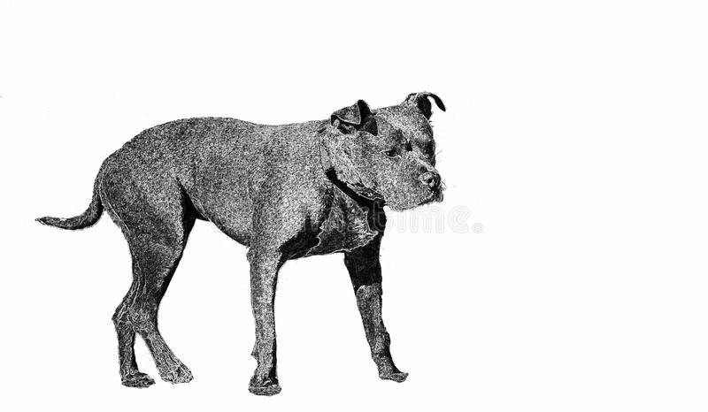Drawing depicting a watchdog in black and white on a white background typically used on `dog-alert` signs that hang from the owner. S` gates royalty free stock image