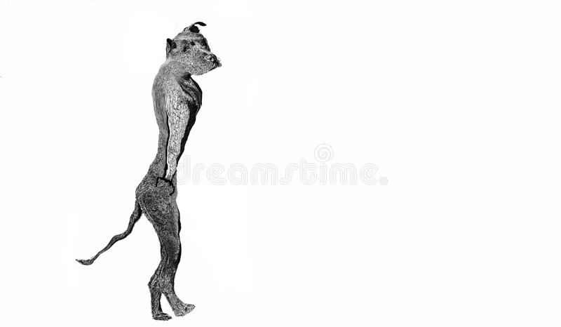 Drawing depicting a watchdog in black and white on a white background typically used on `dog-alert` signs that hang from the owner. S` gates stock image
