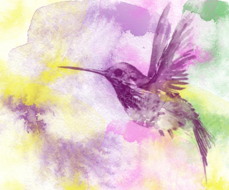 Drawing, effect of a watercolor, hummingbird of lilac color royalty free illustration