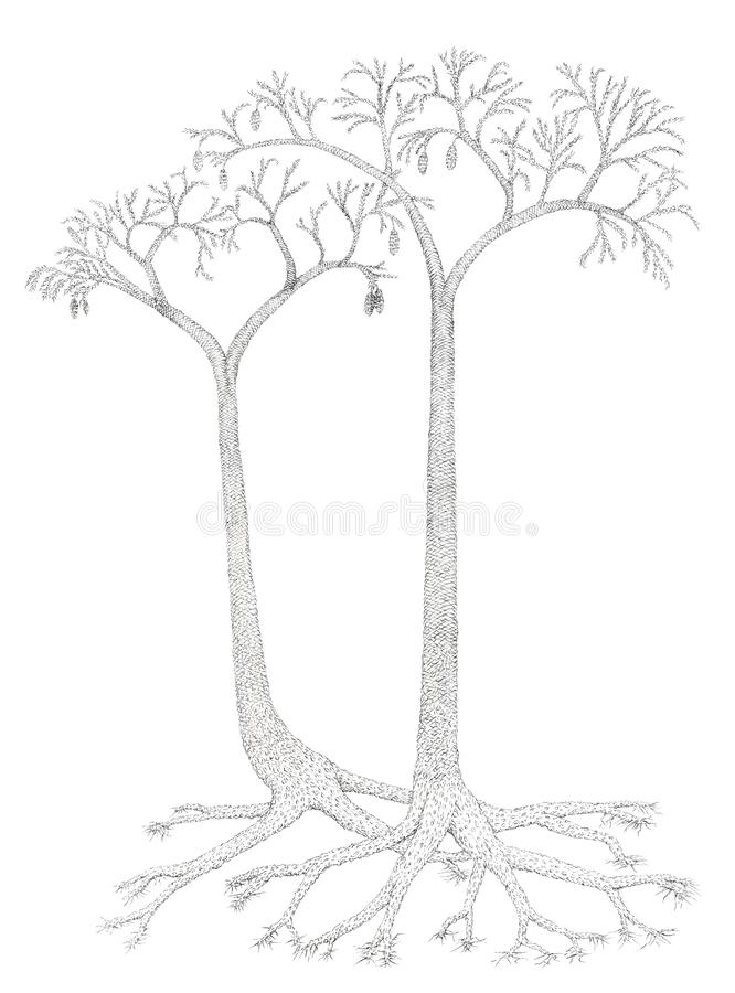 Drawing of a extinct tree-like plants Lepidodendron vector illustration