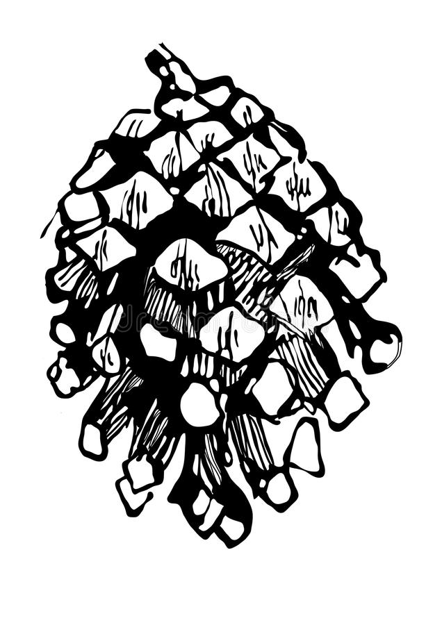 Drawing fir-cone royalty free illustration
