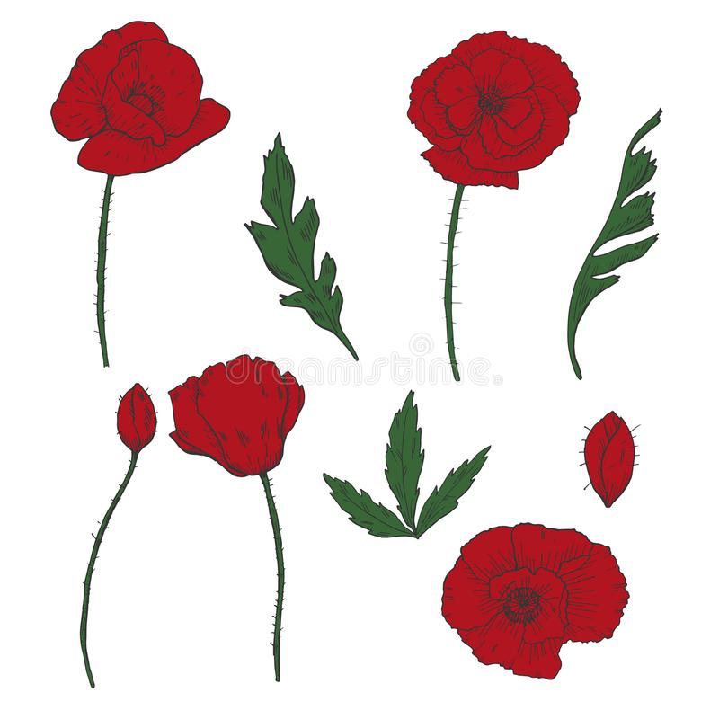 Drawing flowers poppy flower clip art stock vector illustration download drawing flowers poppy flower clip art stock vector illustration of cosmos mightylinksfo