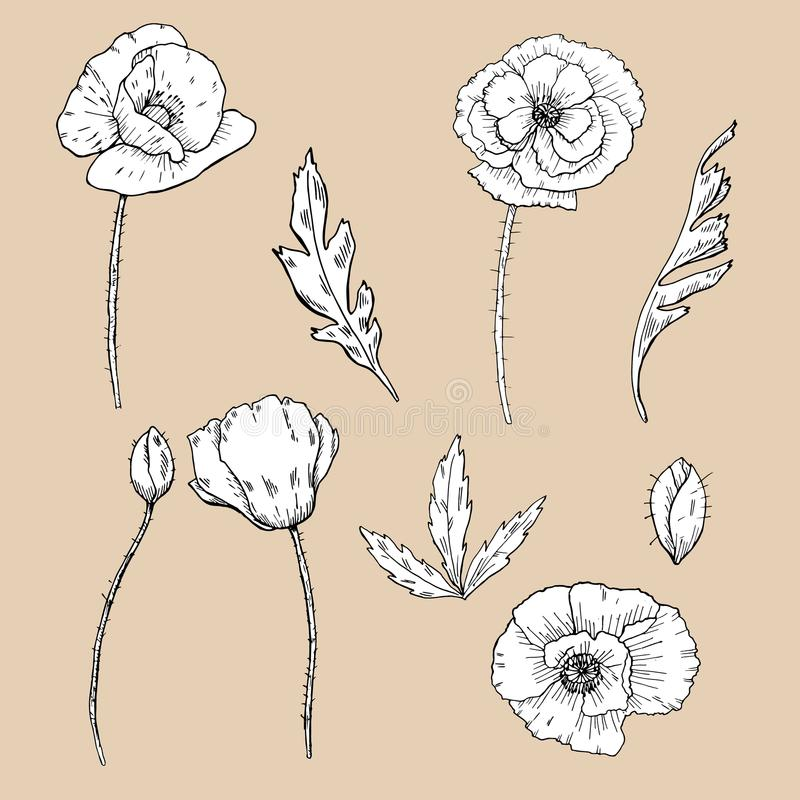 Drawing flowers poppy flower clip art stock vector illustration download drawing flowers poppy flower clip art stock vector illustration of handdrawn mightylinksfo