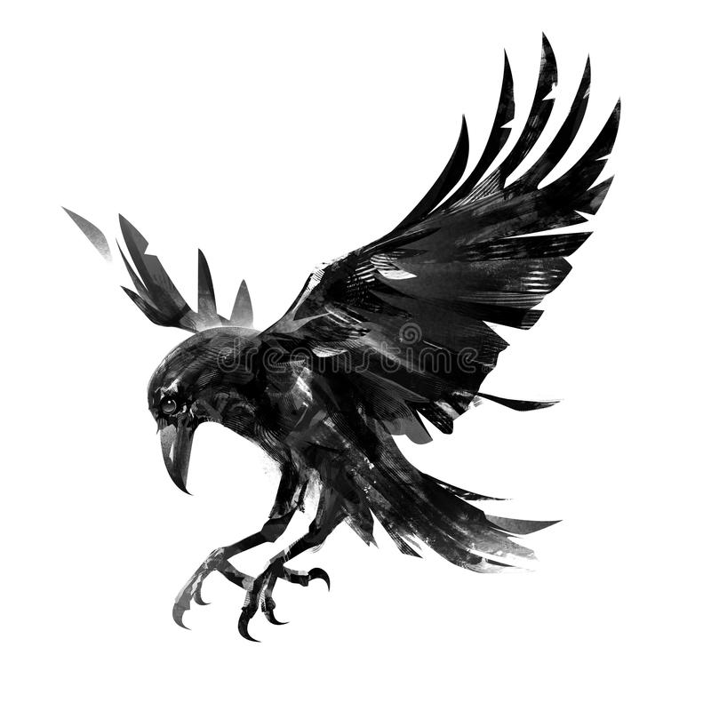 Drawing flying crow on white background. Isolated sketch of a bird. royalty free illustration
