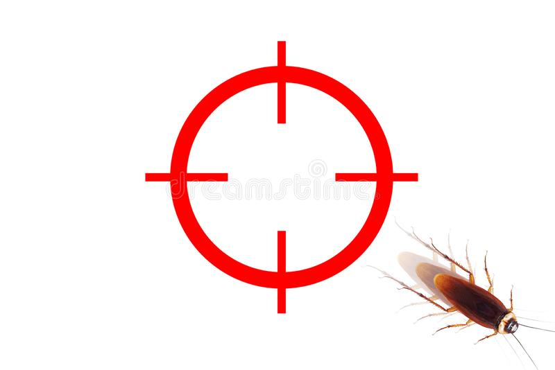 drawing gun target to kill cockroach , missing the mark royalty free stock photos