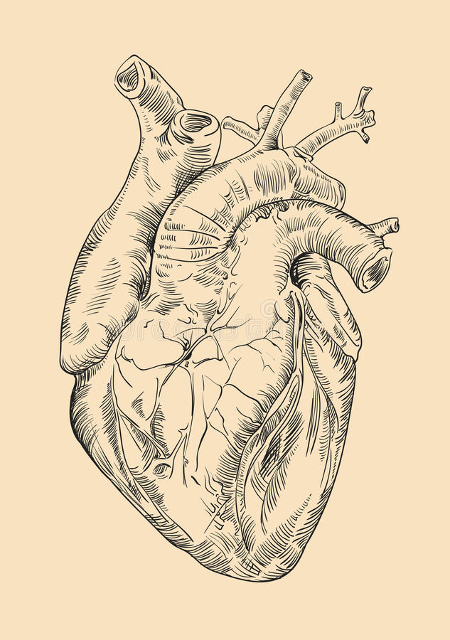 Drawing Human Heart With Flowers Stock Illustration Illustration