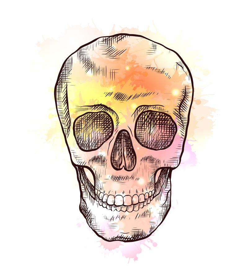 Drawing of human skull with hatching and yellow watercolor splashes. Front view. Colorful engraving art stock illustration