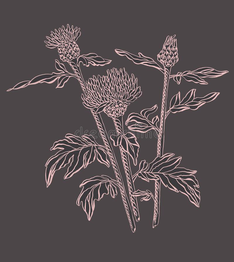 Drawing ink wild pink cornflower on black background vector illustration