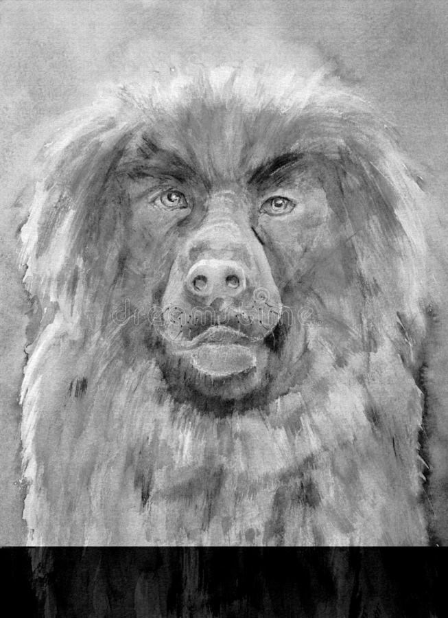 Drawing of Leonberger dog. vector illustration