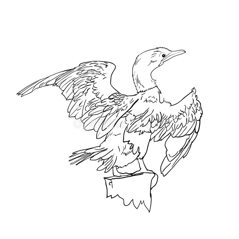Drawing of Little cormorant bird. Hold on twig, illustration royalty free illustration