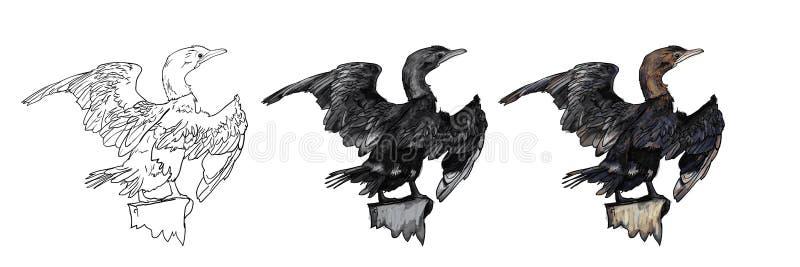 Drawing of Little cormorant bird. Hold on twig,vector illustration stock illustration