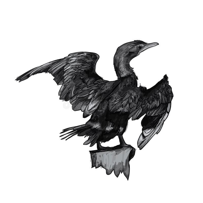 Drawing of Little cormorant bird. Hold on twig,vector illustration vector illustration
