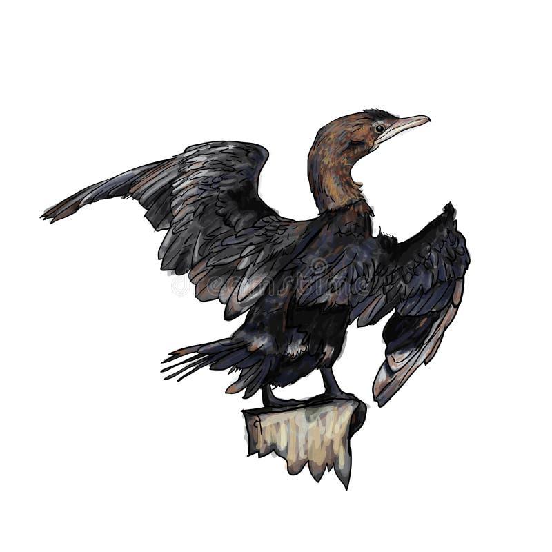 Drawing of Little cormorant bird. Hold on twig,vector illustration royalty free illustration