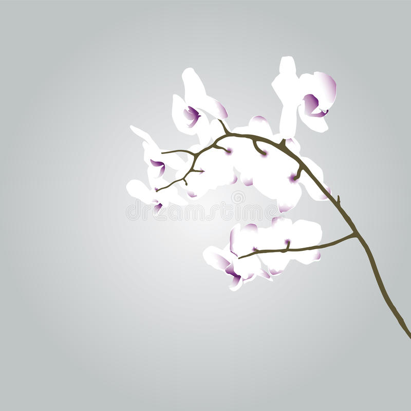 Download Drawing of an orchid stock vector. Image of decoration - 24940244