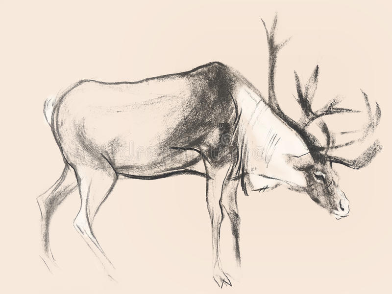Drawing on paper of deer on pink background stock images