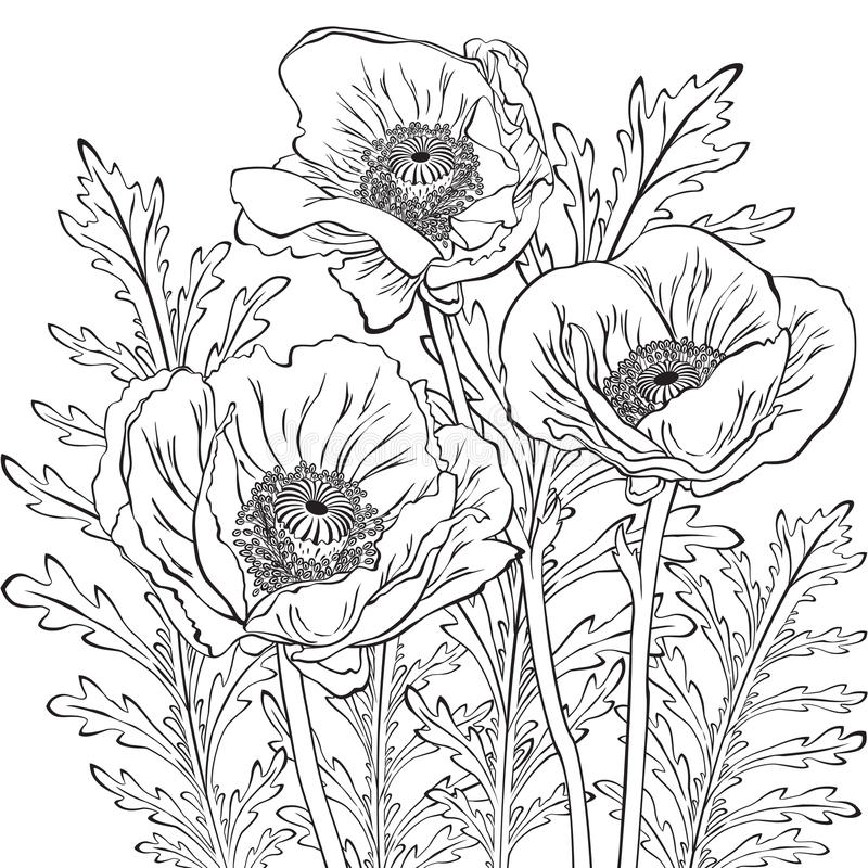 Drawing of poppy flowers stock vector illustration of sketch 94751653 download drawing of poppy flowers stock vector illustration of sketch 94751653 mightylinksfo
