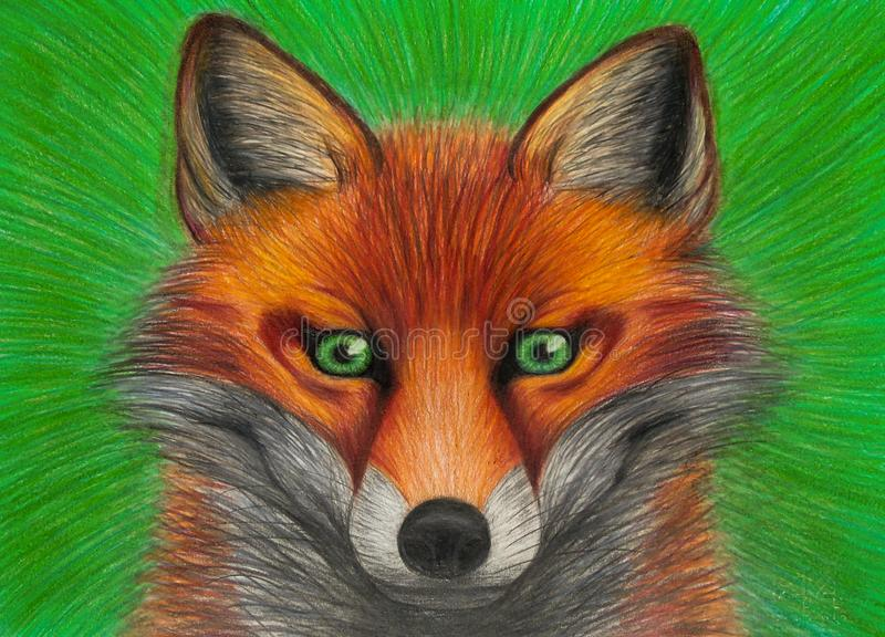 Drawing of portrait of red fox with green eyes on green background, closeup of orange animal, carnivor with beautiful colored fur vector illustration