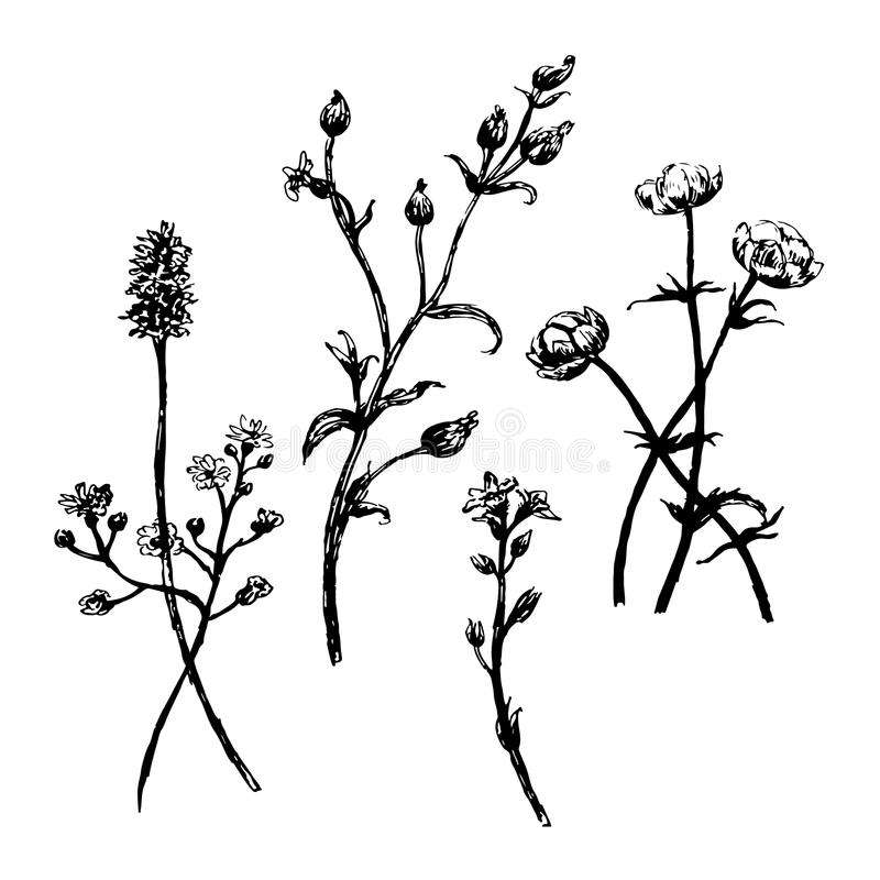 Drawing set collection of wild flowers sketch hand drawn illustration royalty free illustration