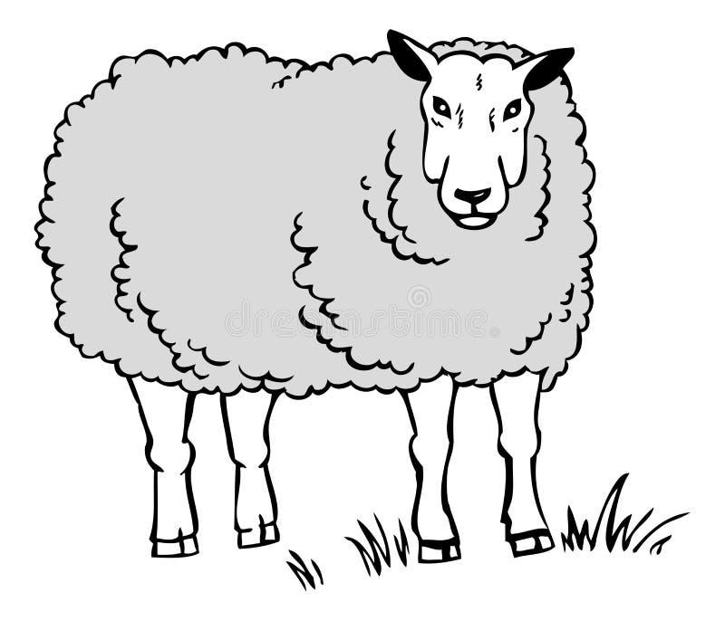 Drawing a sheep vector illustration