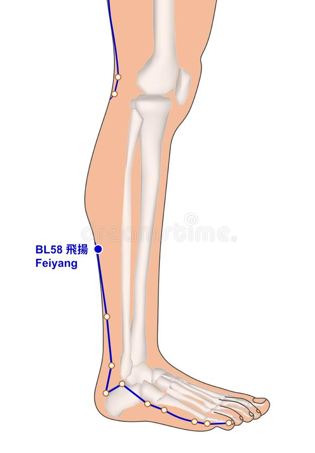 Drawing with Skeleton, Acupuncture Point BL58 Feiyang, 3D Illustration stock photo