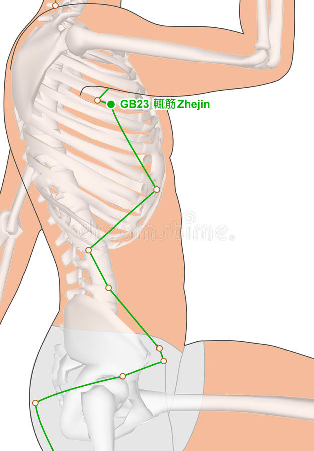 Drawing with Skeleton, Acupuncture Point GB23 Zhejin. Gall Bladder Meridian, Meridians and Acupoints, Human Body, Human Skeleton, Drawing, Gallbladder Meridian royalty free illustration