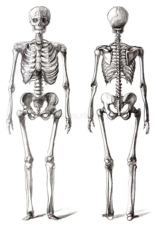 Drawing skeleton vector illustration
