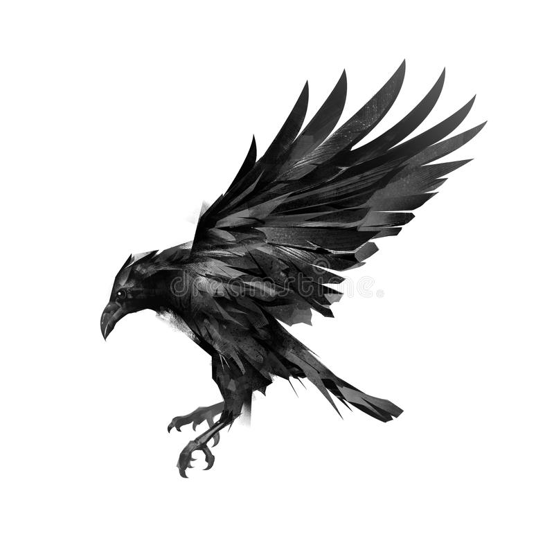 Drawing a sketch of a flying black crow on a white background royalty free stock photography