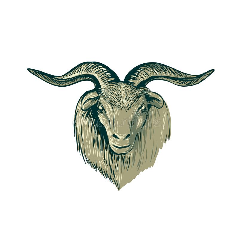 Cashmere Goat Head Drawing. Drawing sketch style illustration of a cashmere goat head viewed from front on isolated background royalty free illustration