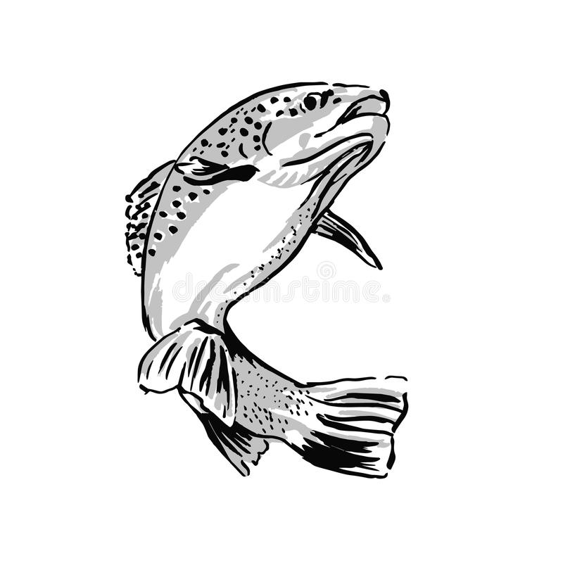 Drawing trout. Hand drawing trout. Vector illustration royalty free illustration