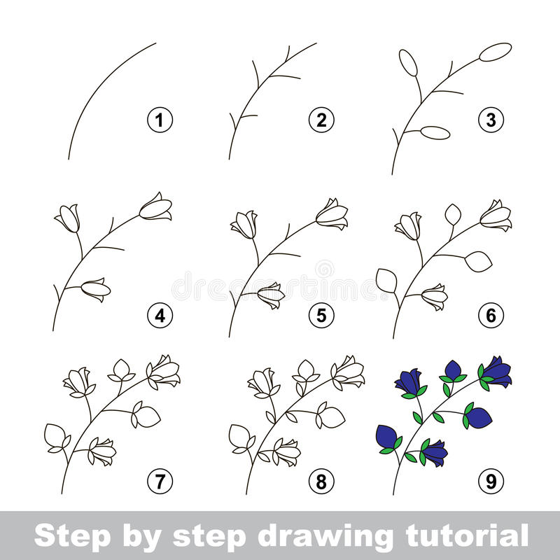 download drawing tutorial how to draw a bluebell stock vector illustration 65220584