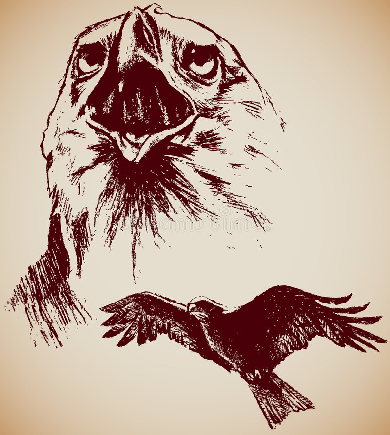 Drawing of two Eagles