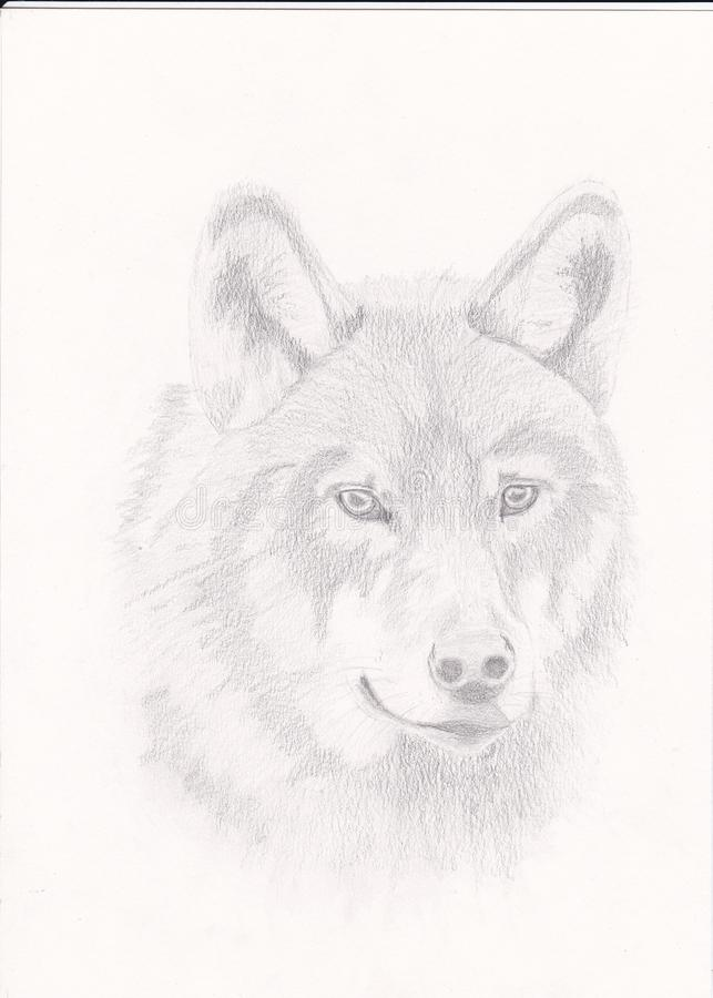 Drawing a wolf. Wolf drawing on paper royalty free stock image