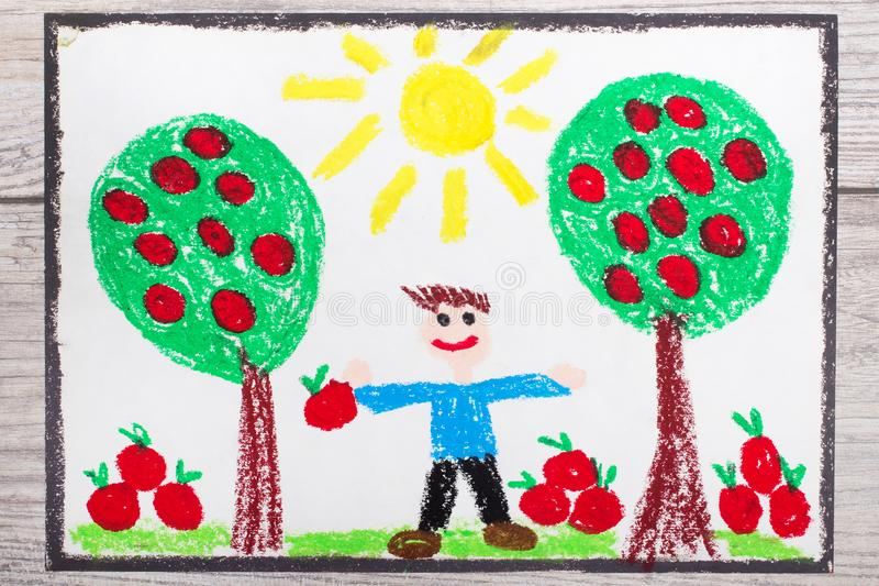 Drawing: young, smiling man is holding apples. Apple trees in the orchard. Photo of colorful hand drawing: young, smiling man is holding apples. Apple trees in stock illustration