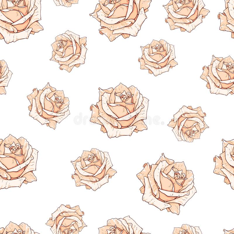 Drawn beige roses seamless background isolated on white. Flowers illustration front view. Pattern in romantic style for design. Of fabrics royalty free illustration