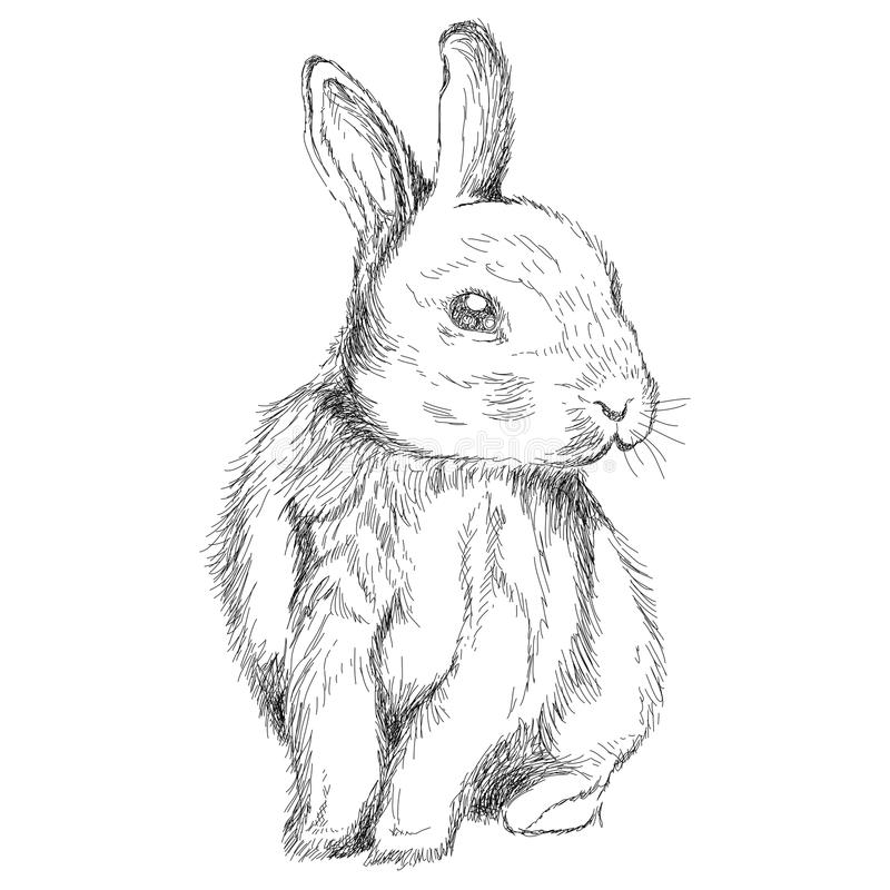 Drawn bunny rabbit in line drawing vector illustration
