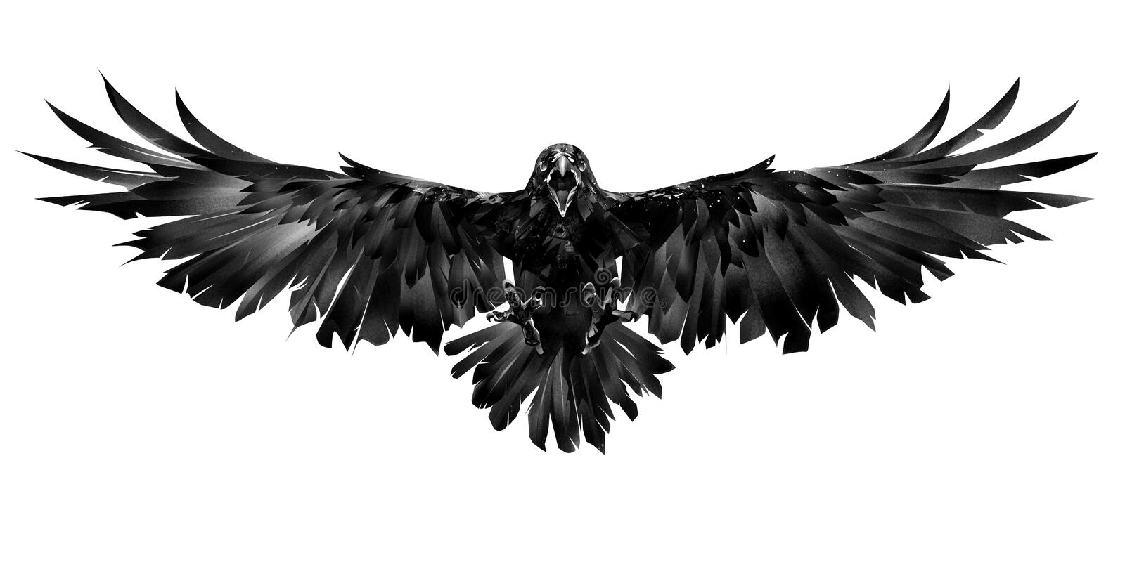 Drawn flying raven on a white background stock photography
