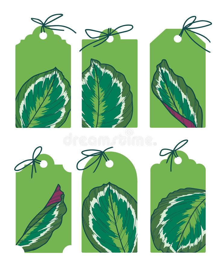 Drawn green vector labels with exotic Calathea Medaillon leaf illustrations royalty free illustration