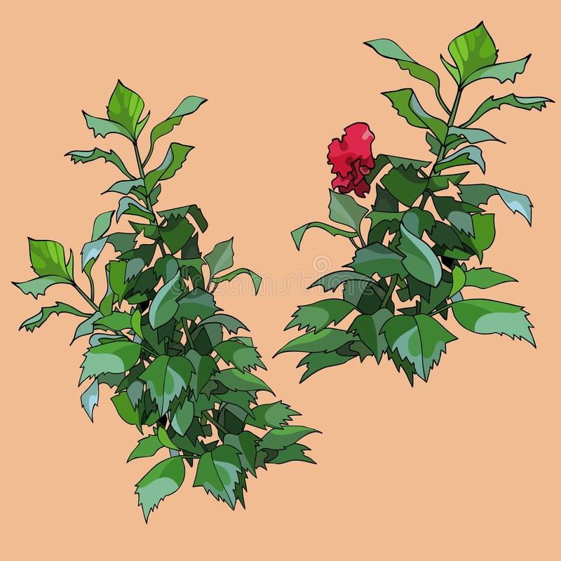 Drawn isolated green plants with red flower. On beige background stock illustration