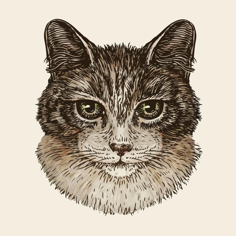 Download Drawn Portrait Of Cute Kitten Cat Animal Pet Sketch Vintage Vector