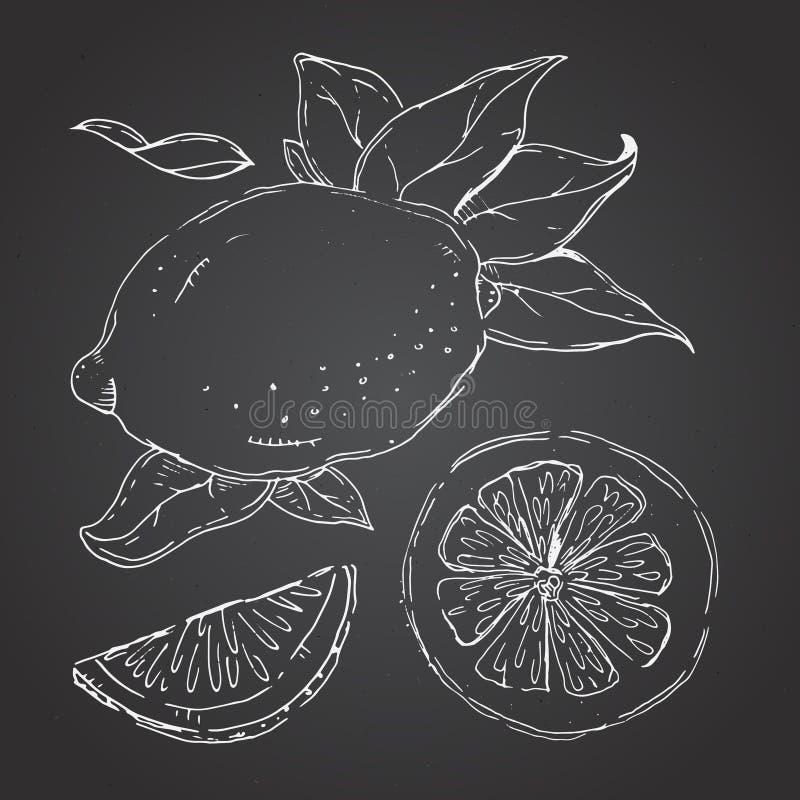 The drawn set of lemons. Lemon segments, juicy lemon. Dark background. Vector illustration vector illustration