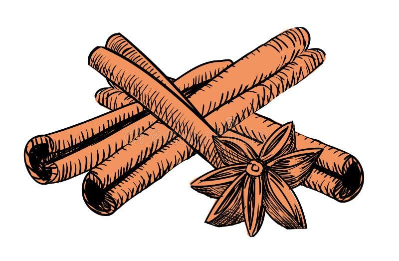 Drawn vintage cinnamon vector illustration