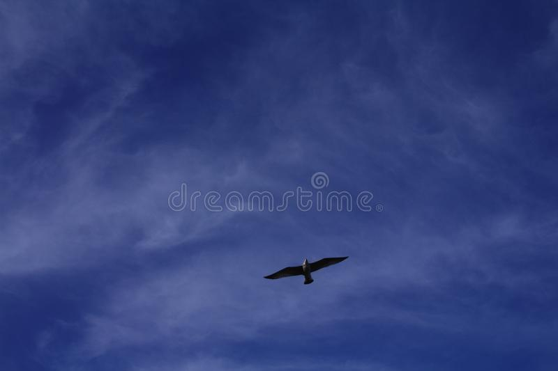 Dream and fly royalty free stock images