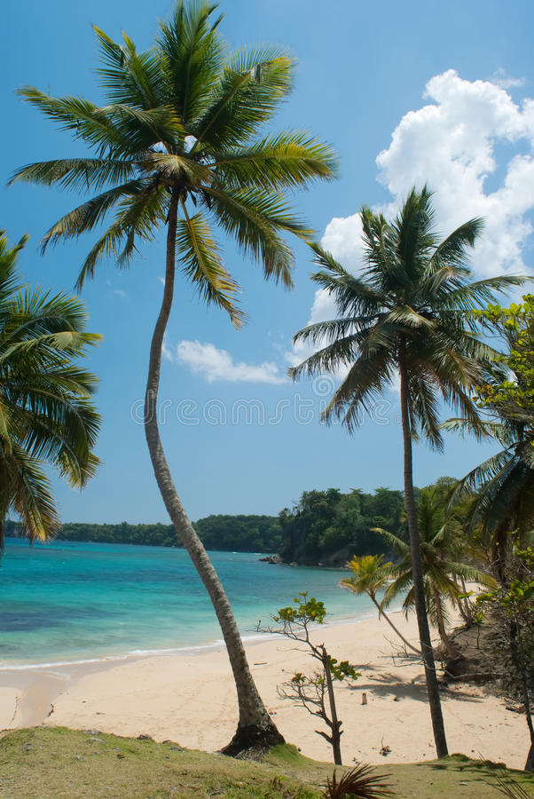 Download The dream tropical beach stock photo. Image of nature - 28986364