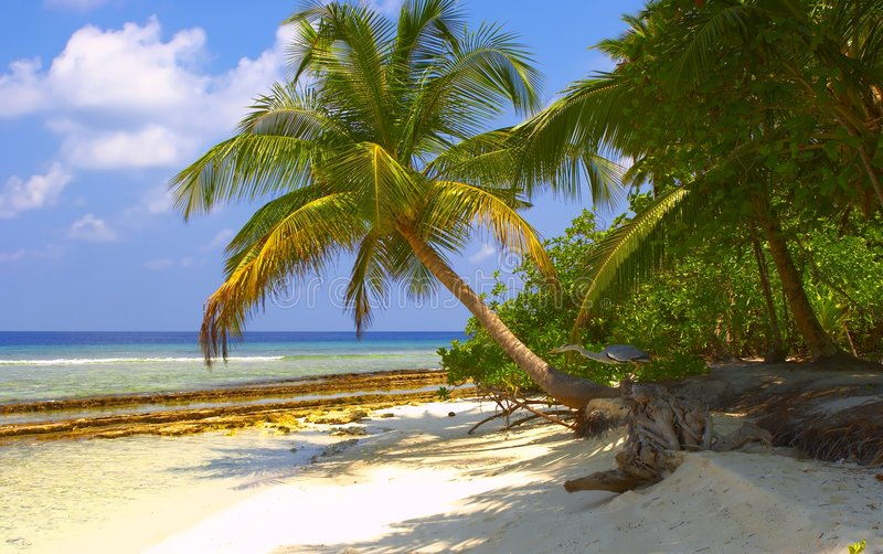 Dream Tropical Beach with Palm Trees and Bird stock photo
