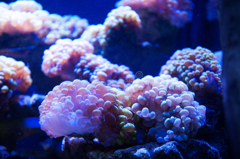 Dream of underwater photography algae in the aquarium.  royalty free stock images