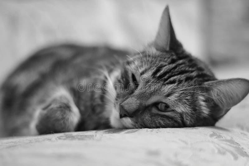 dreamer Portret die op het bed van een binnenlandse kat liggen royalty-vrije stock afbeelding
