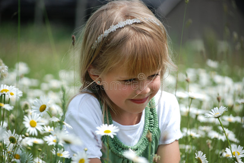 Dreamin  In Daisies Stock Images