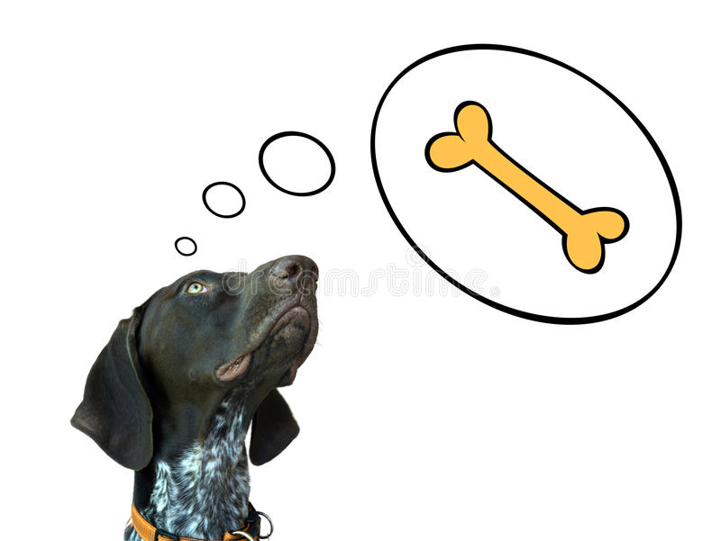 Dreaming dog. Conceptual image of german short hair pointer dreaming about bone stock illustration