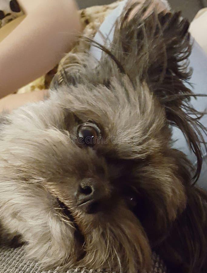 Dreaming dog royalty free stock photo
